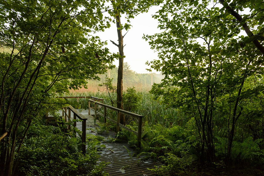 A bridge on a hiking trail in a green forest